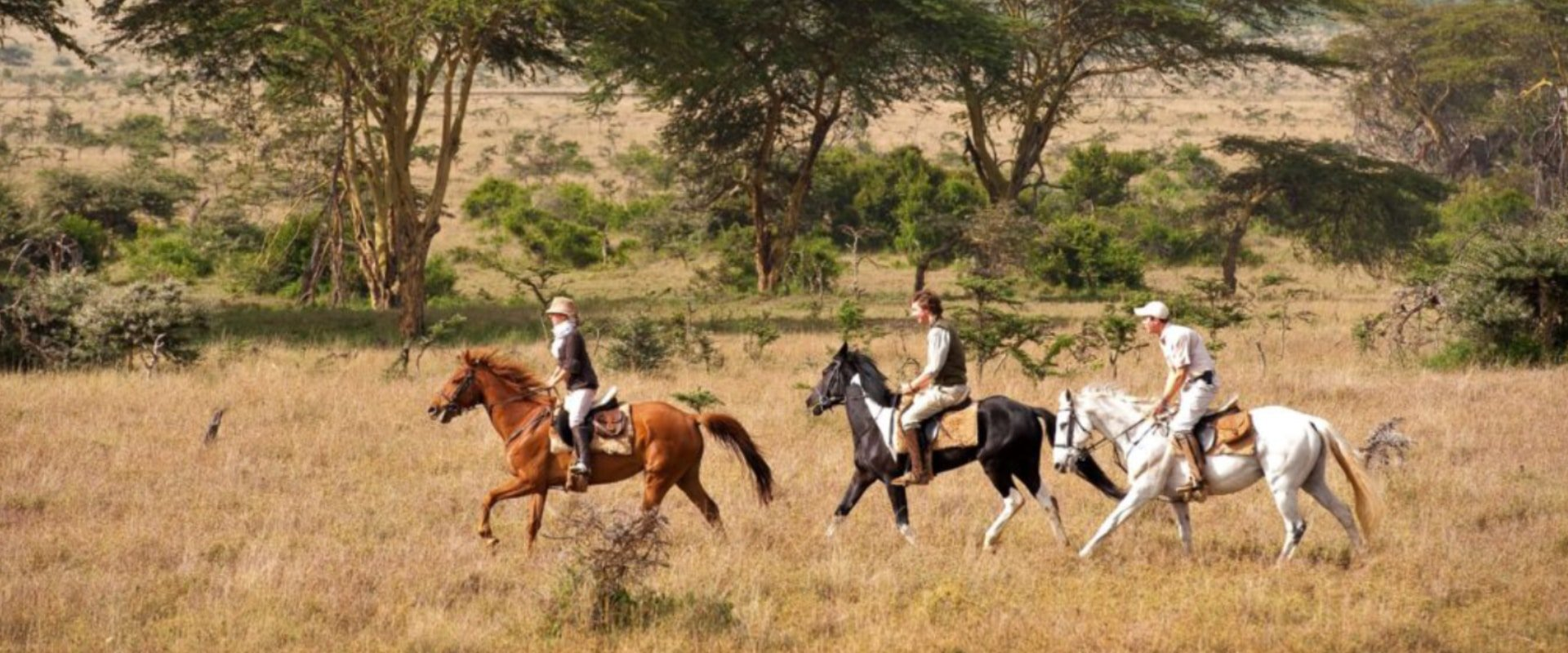 Experience the unique exhilaration of a horse riding safari