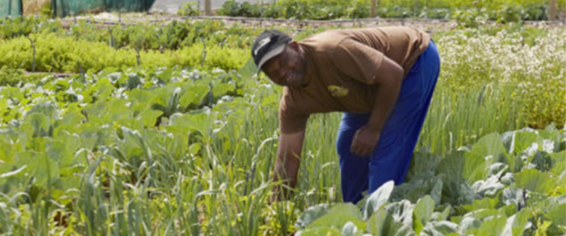 Visit a Khayelitsha entrepreneurial township