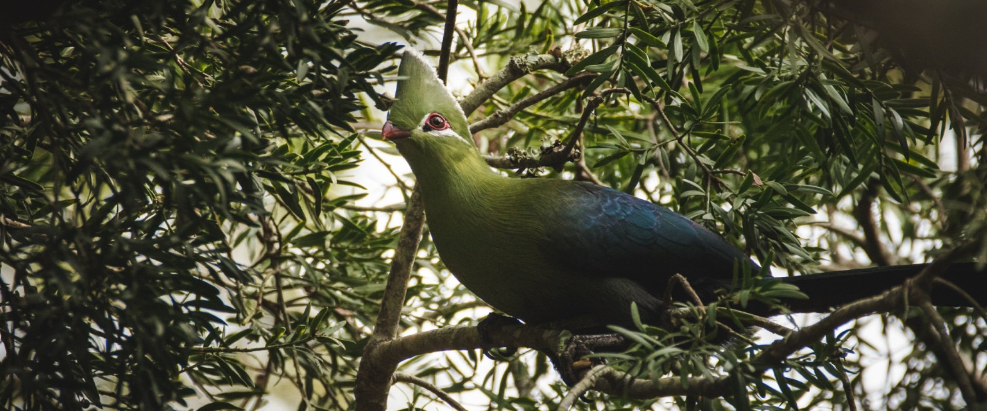 Admire indigenous forest birds