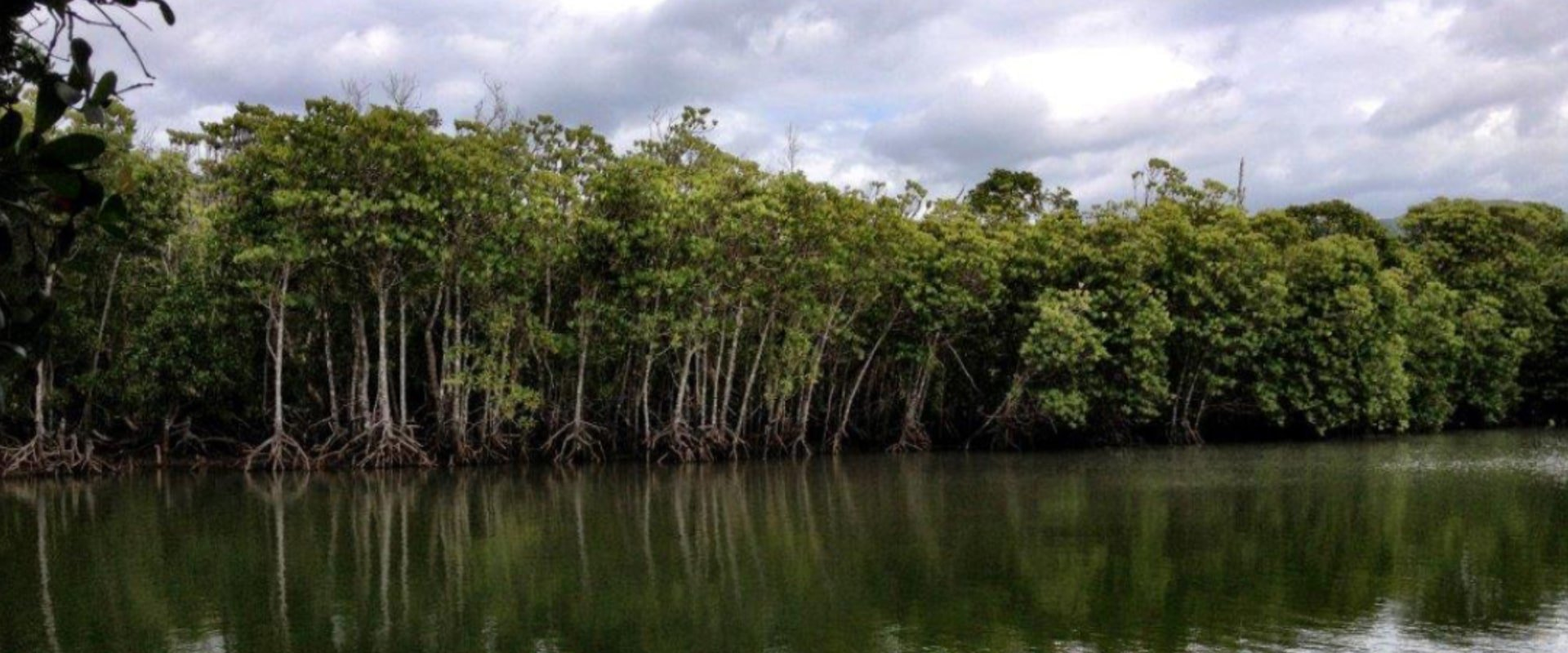 Hike to the Mngazana Mangrove