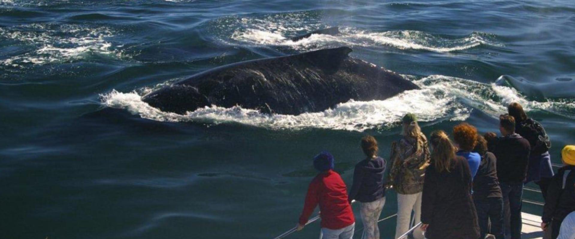 View marine life on an ocean safari