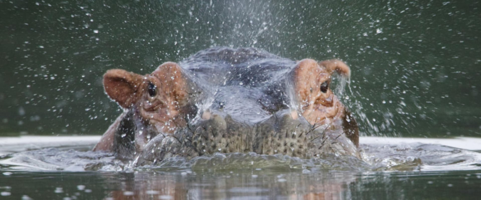 Photographic Safaris on the magical Zambezi River