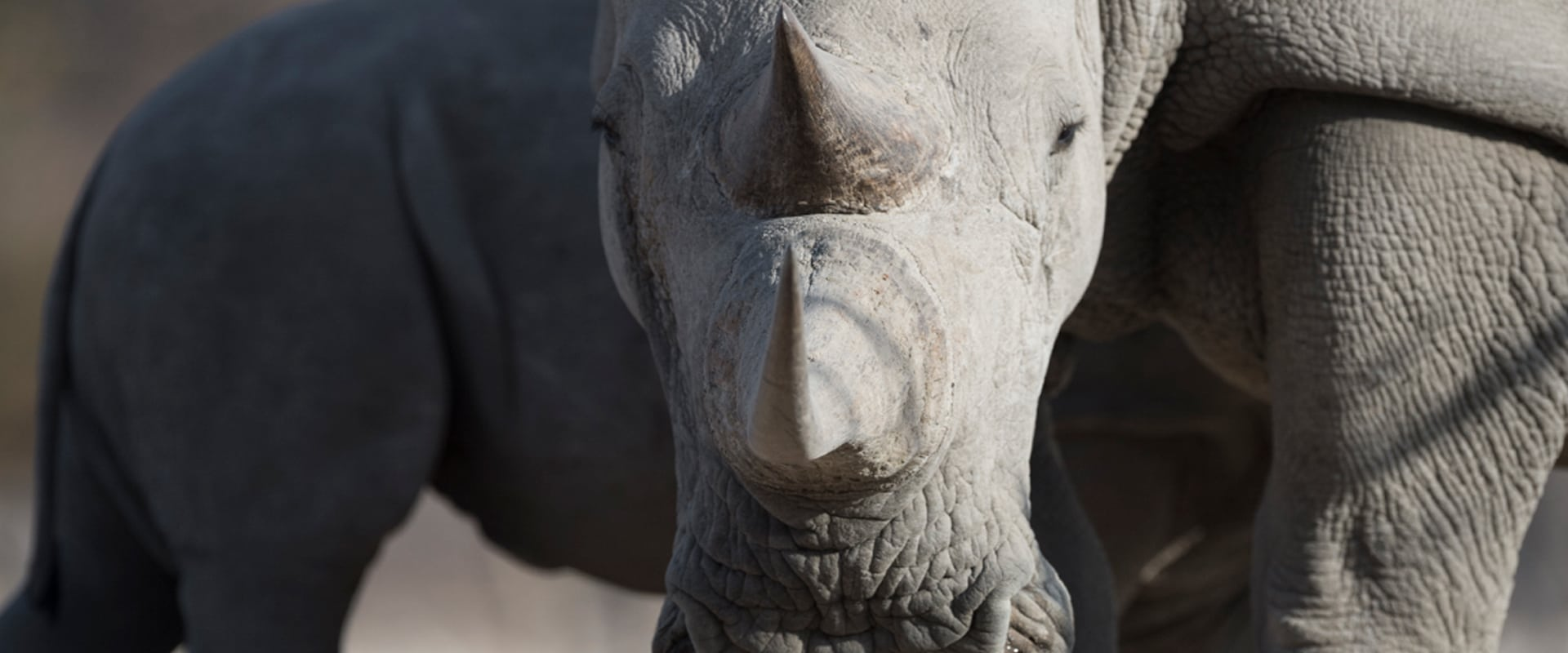 Feel the thrill as you go rhino tracking