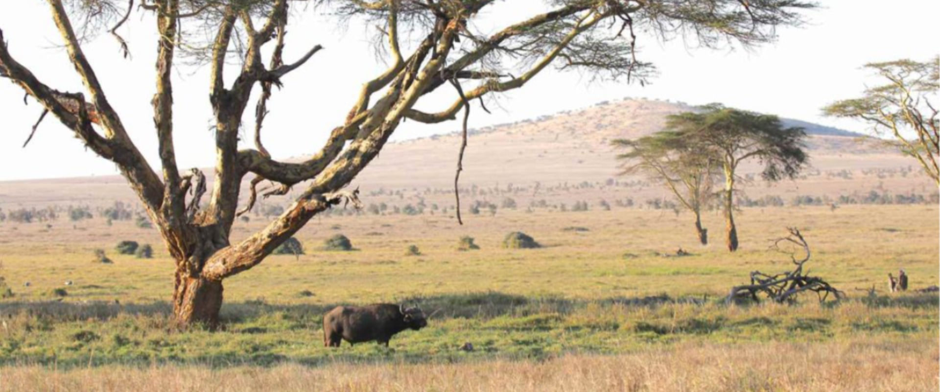 Walking safaris at your own leisurely pace