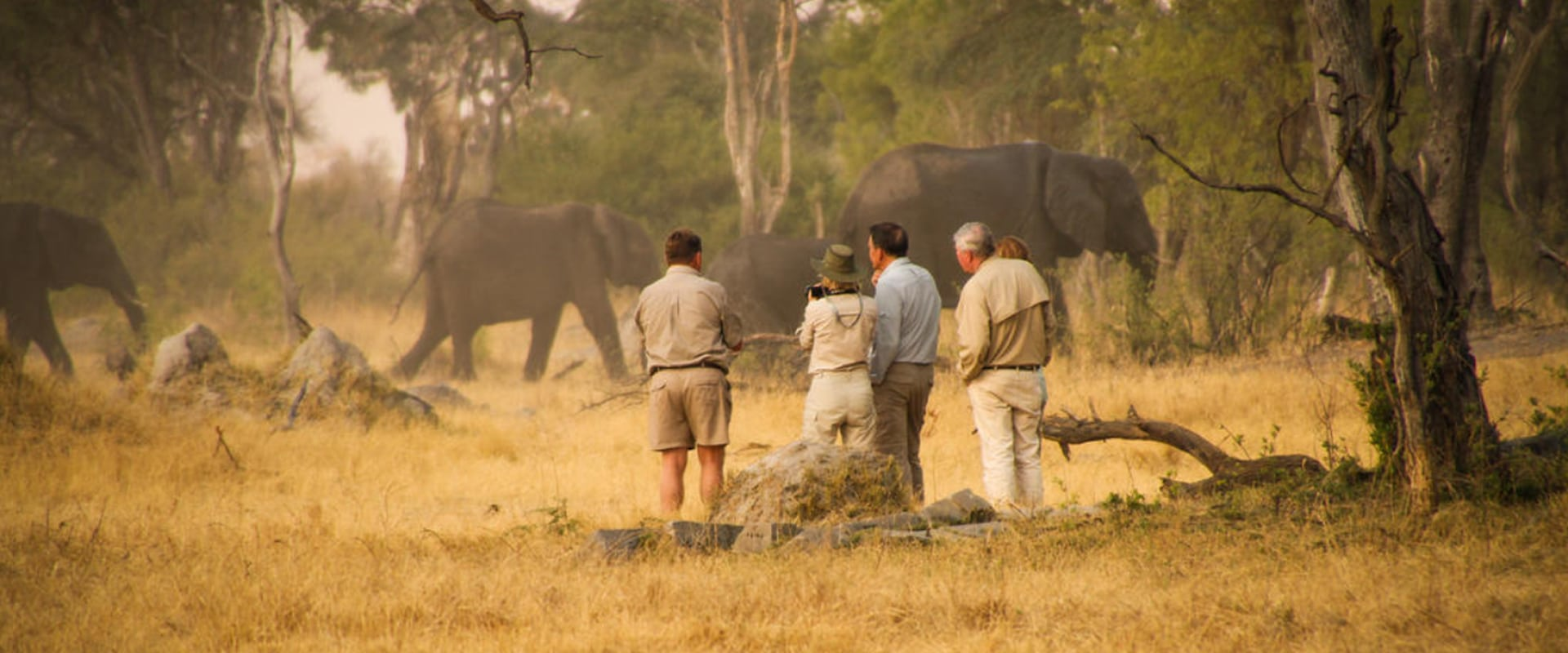 Explore the bush on foot to see all things big and small on a guided walking safari