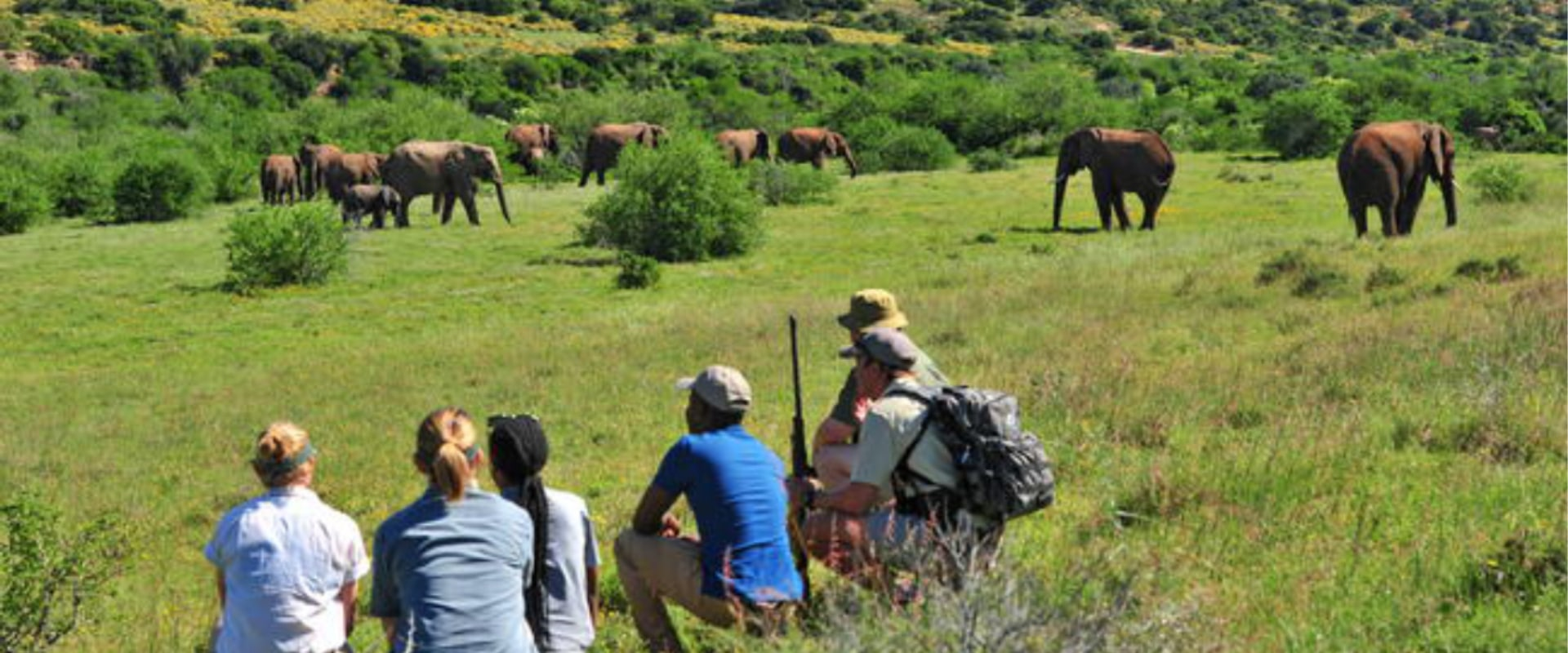Experience a guided bush walk
