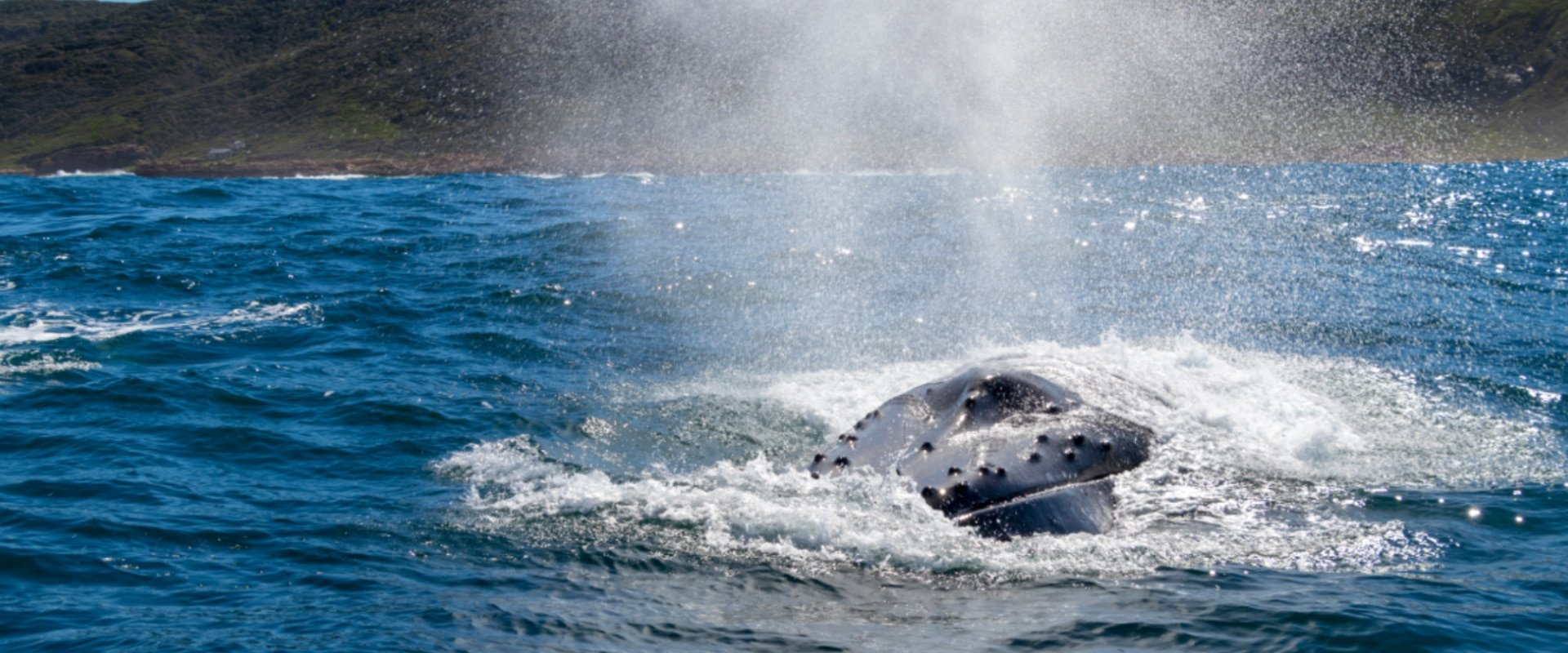 Delight in phenomenal whale watching