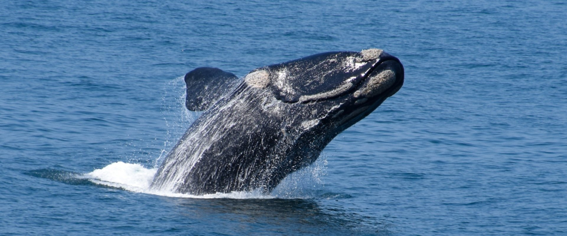 Witness majestic whales