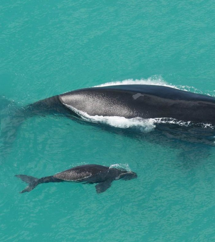 Whale Watching (Seasonal) 3