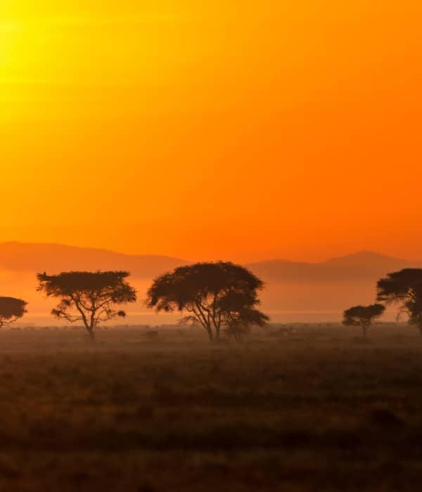 An African Dream 3
