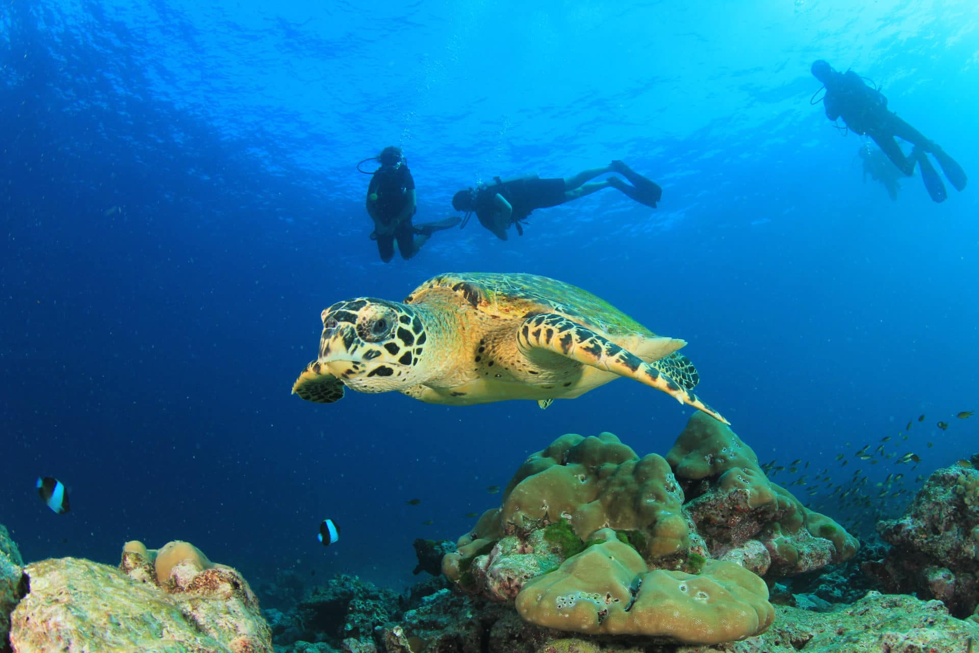 The survival outlook for Marine Turtles 3