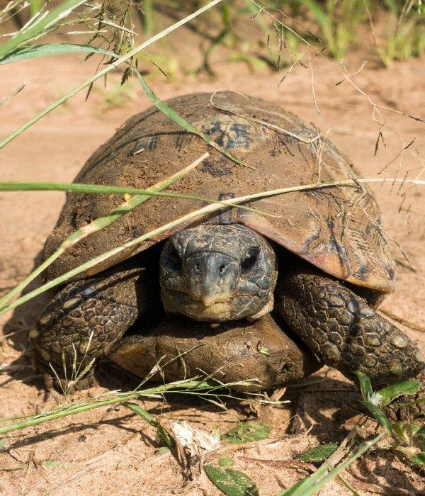 Akagera National Park 5