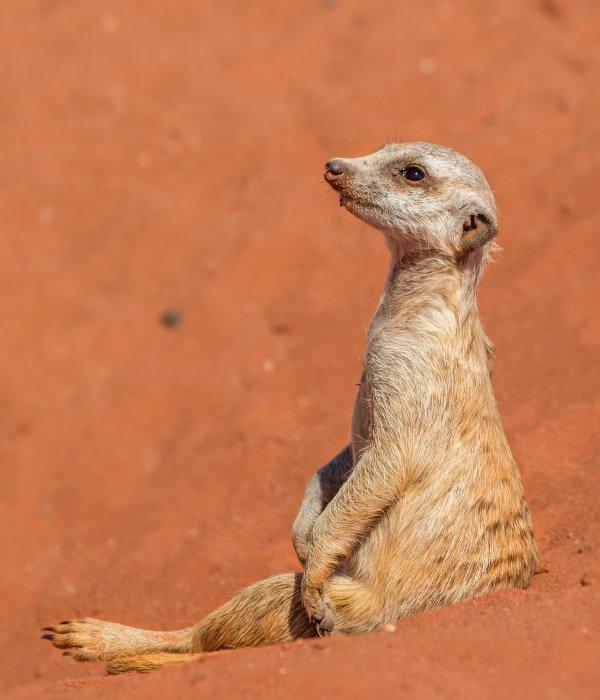 Kalahari Desert (Namibia) 7