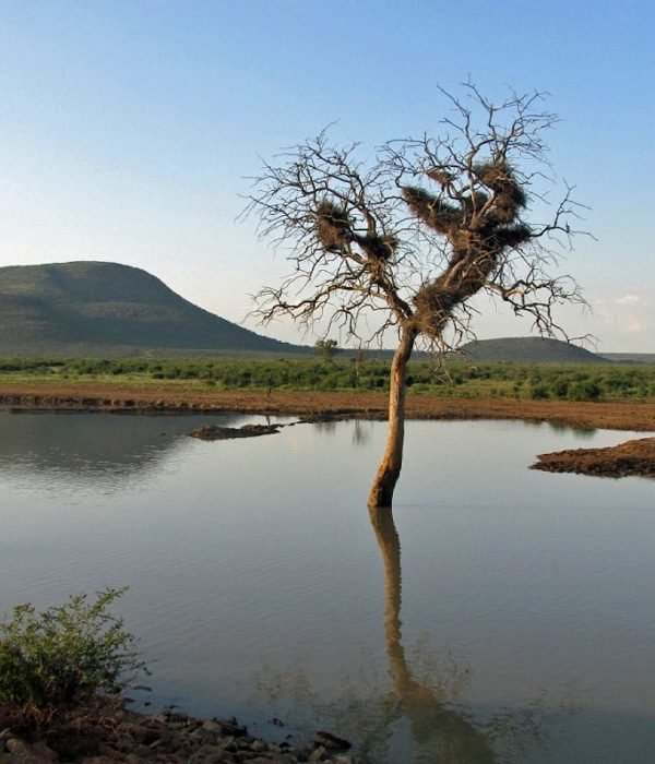 Madikwe Game Reserve 3