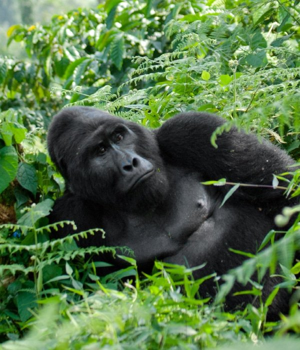 Mgahinga Gorilla National Park 8