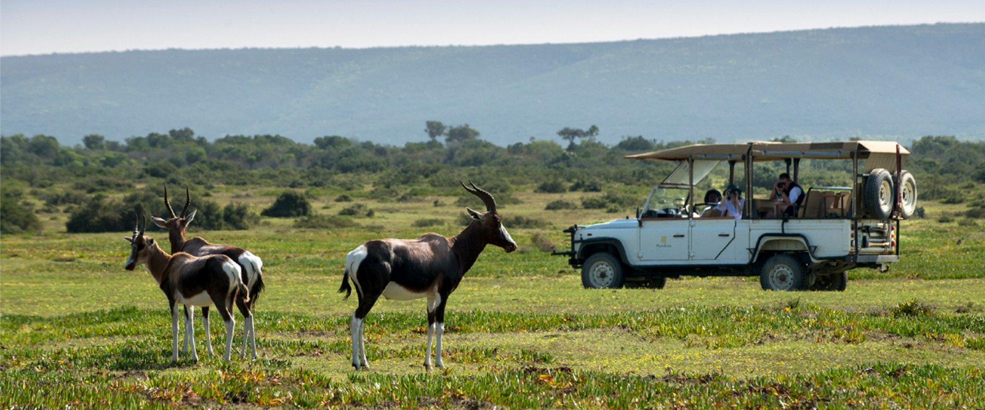 Explore the delicate fynbos and all its inhabitants in a private 4×4 safari