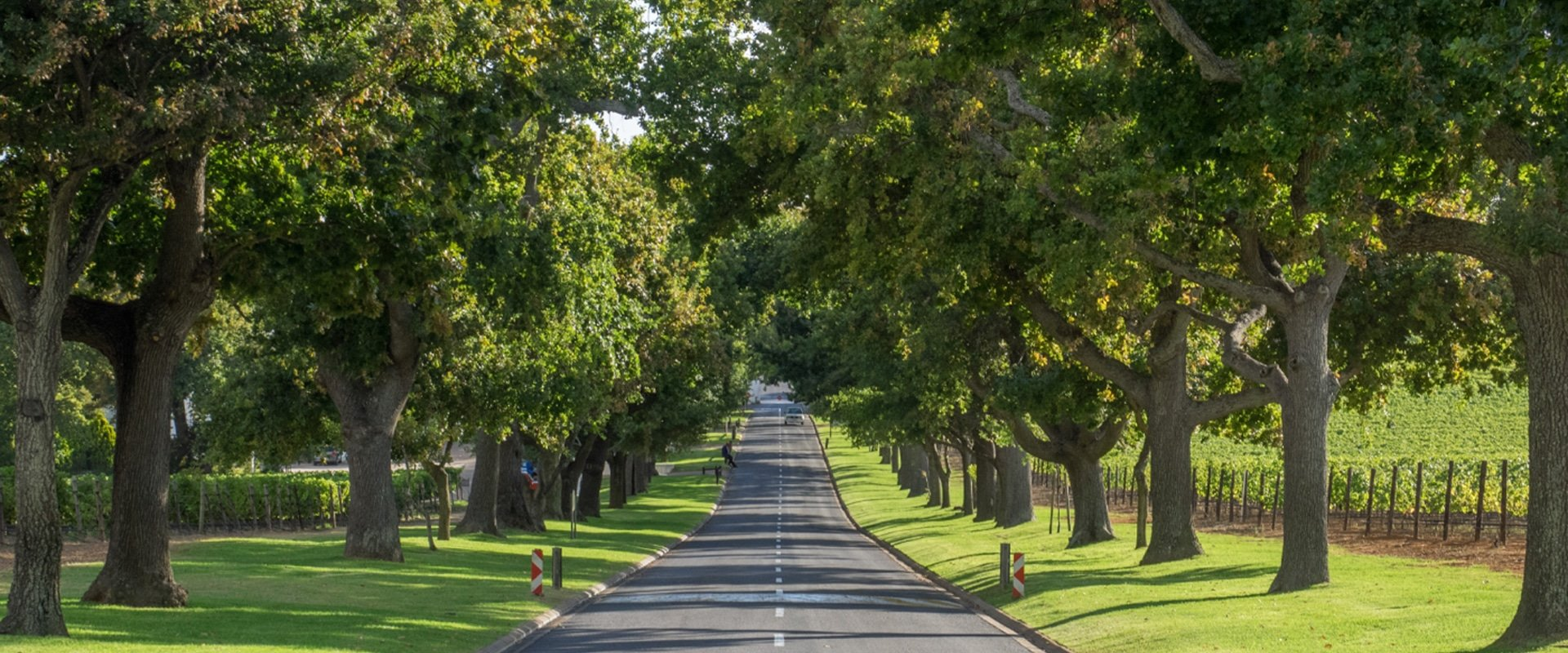 Be transferred to the winelands by a private driver in a classy vintage car