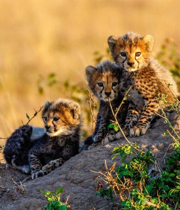 Masai Mara 4
