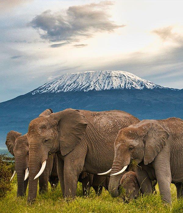 Amboseli National Park 3